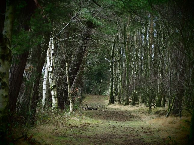 The lovely wooded path on the southern edge of the reservoir