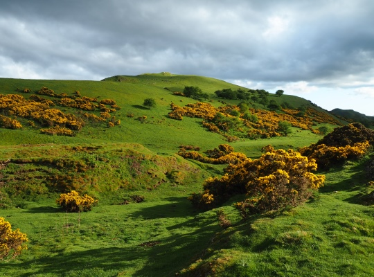 The gorse covered slopes of Birkett Hill