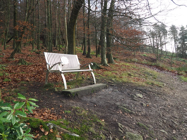 The memorial bench in Crag Wood