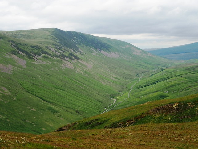 Calf Top above Barbondale
