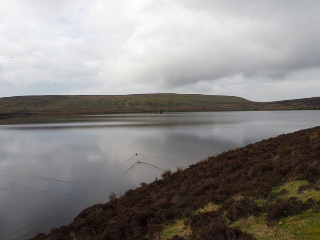 Brown Bank from Upper Barden Reservoir
