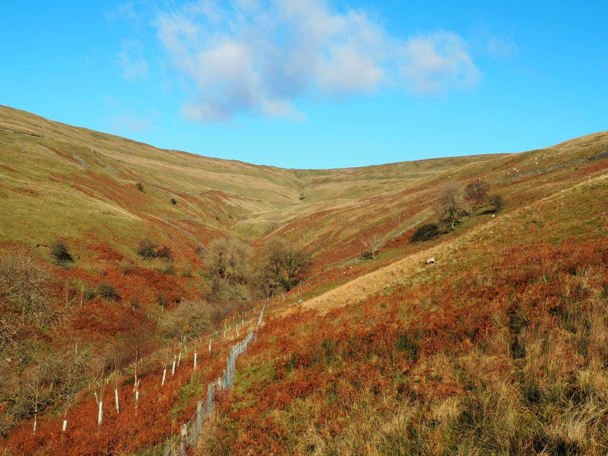 Heading on to Yockenthwaite Moor via Deepdale Gill
