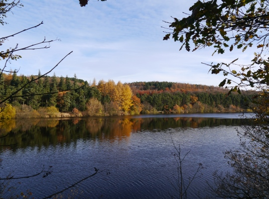 Autumn trees at Fewston Reservoir