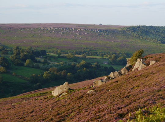 Gollinglith Crags is a modest gritstone crag situated on Gollinglith Ridge above the valley of Colsterdale to the west of Masham.