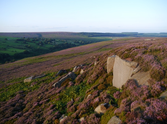 The winning combination of gritstone and purple heather