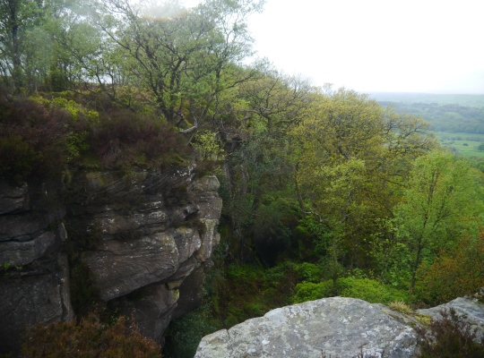 Guise Cliff is largely obscured by a tangle of trees and weather
