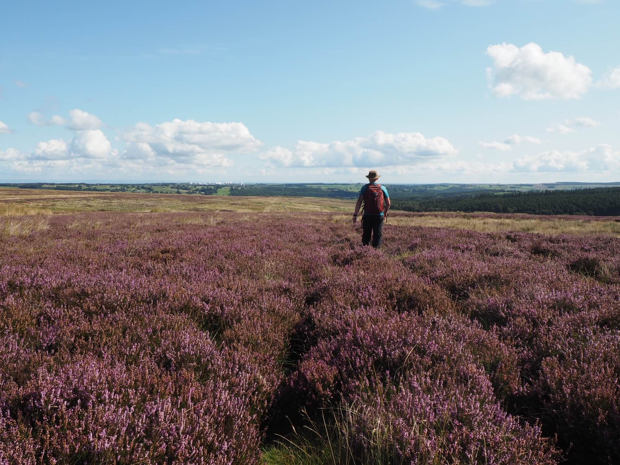 Heading through the heather