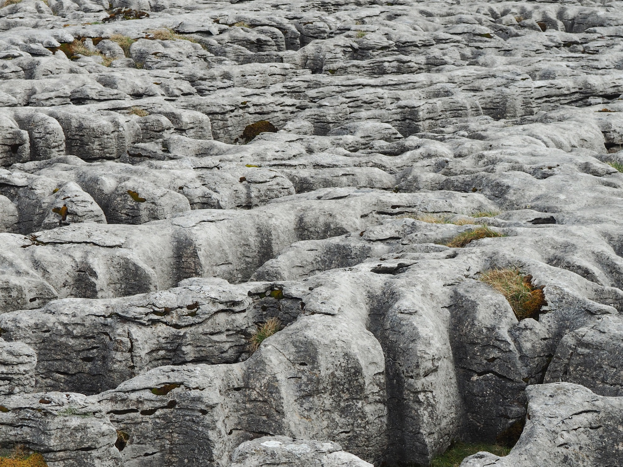 Limestone pavement on Scales Moor
