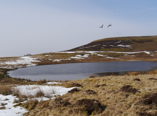 As close as I got to Locker Tarn