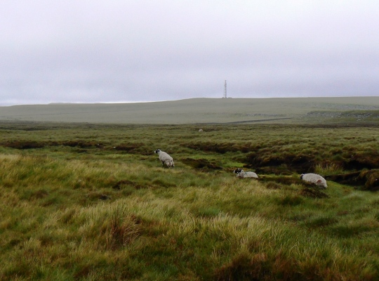Moudy Mea from Longband Moss