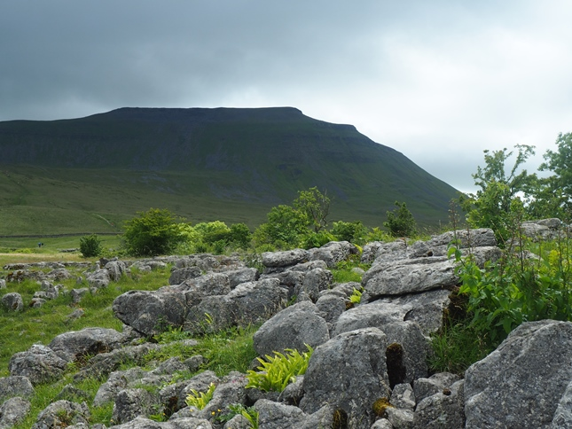 Ingleborough from Southerscales