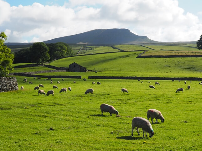 Pen-y-ghent from Horton-in-Ribblesdale