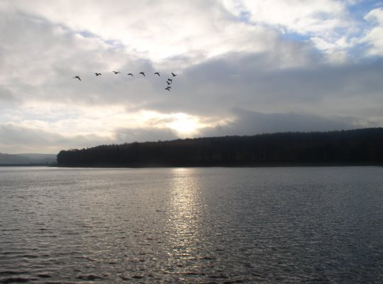 Canadian geese flying in formation above Swinsty Reservoir