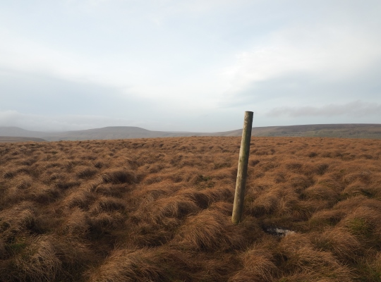 The stake marked summit of Woodale Moss