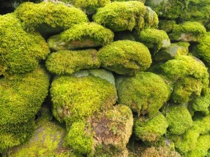 Mossy walls at Walden Head