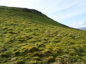 Climbing the grassy slopes of Addlebrough