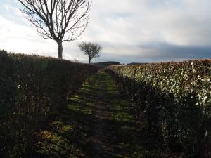 The initial path between hedgerows