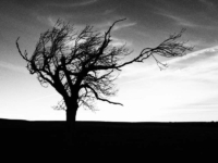 A lonely tree above Agill