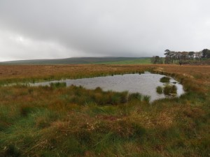 A small tarn on Tarn Moss