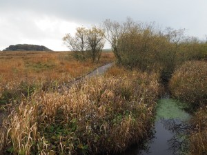 Duckboards and watery channels in Tarn Moss
