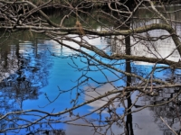 More reflections in the River Nidd