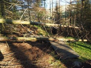 Felled trees across the right of way