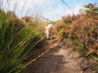 A dog's eye view of the path