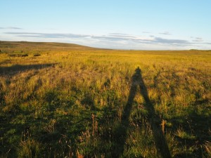 Casting a long shadow over Galloway Pasture