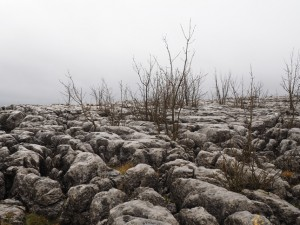 Some more limestone pavement