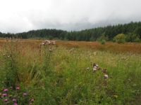 A meadow in the plantation