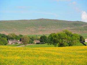 Cracoe Fell above a field of buttercups