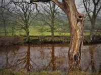 Reflections in the River Wharfe
