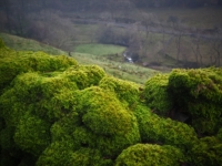 A mossy wall