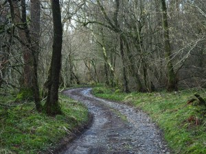 The path through Springs Wood