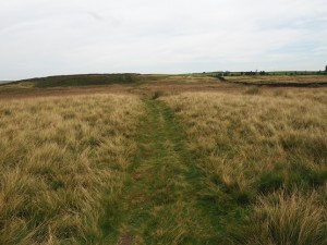 The path climbing Kildwick Moor