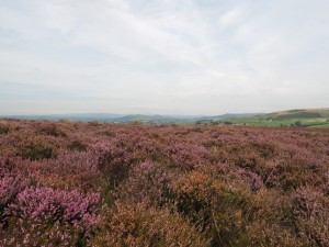 Low Bradley Moor looking towards Flasby Fell