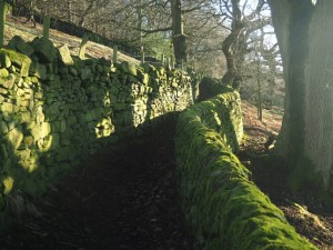 The super path between Micklethwaite and Greenhill