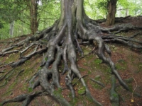 I loved the exposed roots on this tree