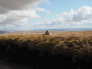 The tiny cairn marking the top of Fountains Fell South