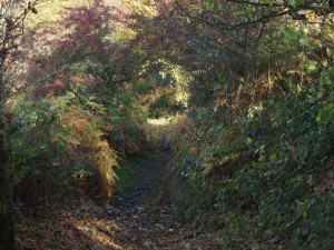 The lovely autumnal path we took from High Fremington