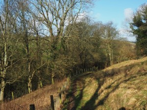 The path from Lofthouse to the Nidd