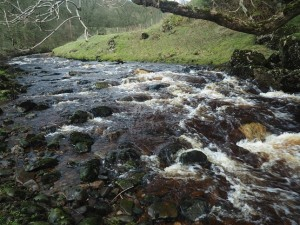 The River Nidd as it rushes in to Goyden Pot