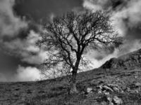 A tree above Dib Scar