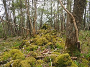 A mossy wall near the top of Gregory Scar