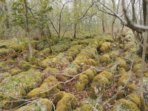 Moss covered limestone pavement