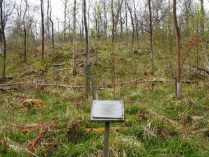 The area of the wood kept in memory of Stephen Harland