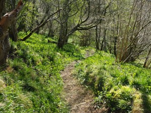 The path leading down into Scar Wood