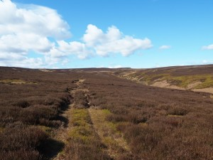 The faint path in the heather I followed above Ulfers Gill