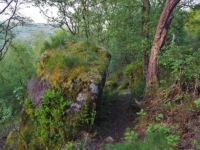 The path passing between a large overgrown boulder