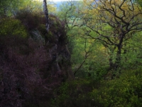 Much of the cliff face is covered in trees